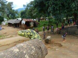 Meller chameleon found in Tanzania